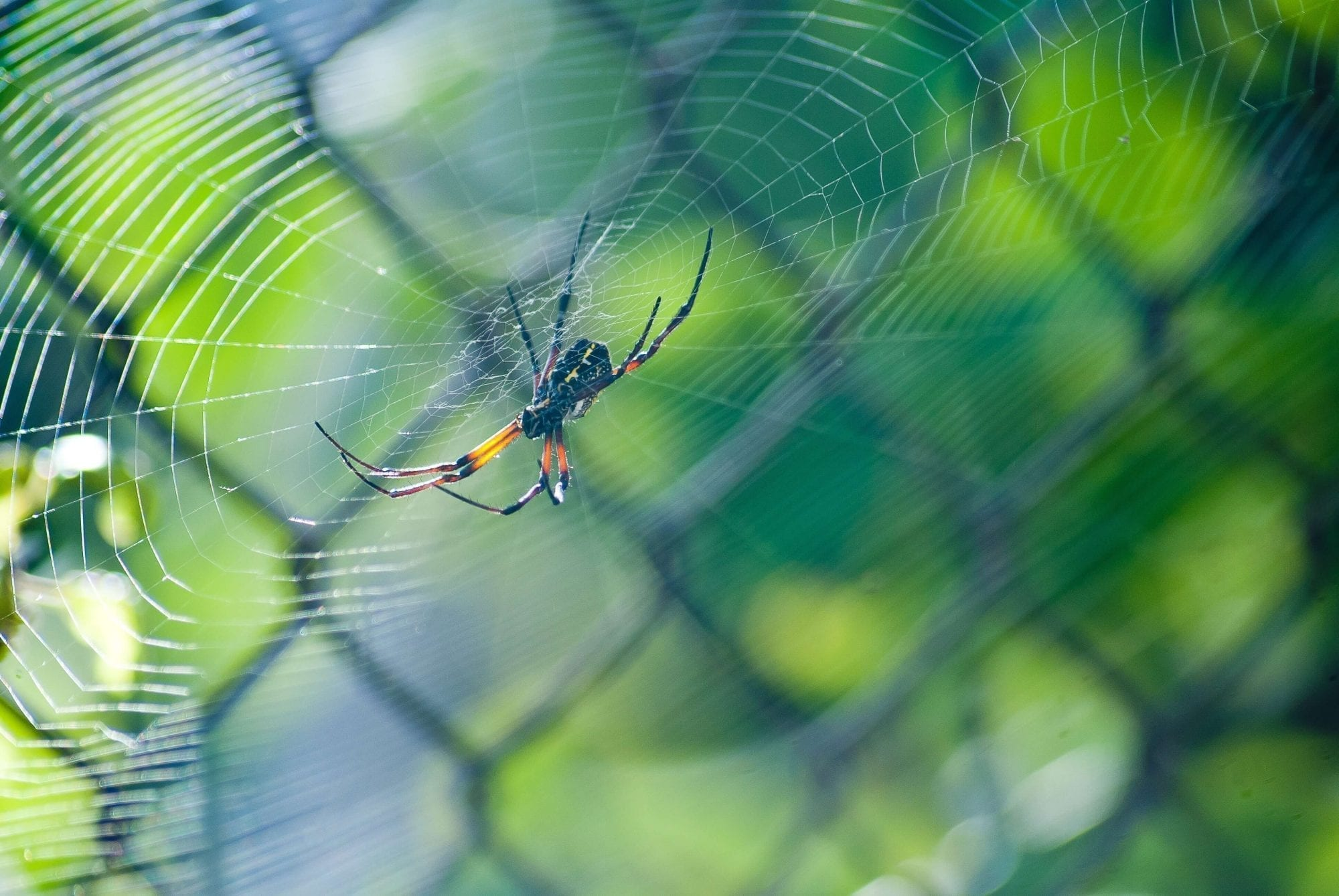 How Do You Know If You Have A Spider Problem