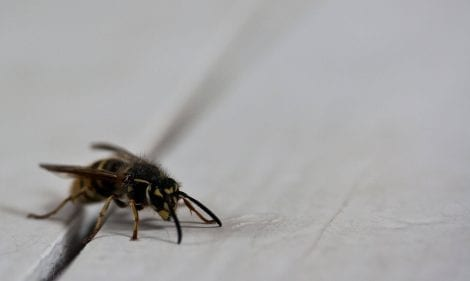 How to Get Rid of Wasps and Bees