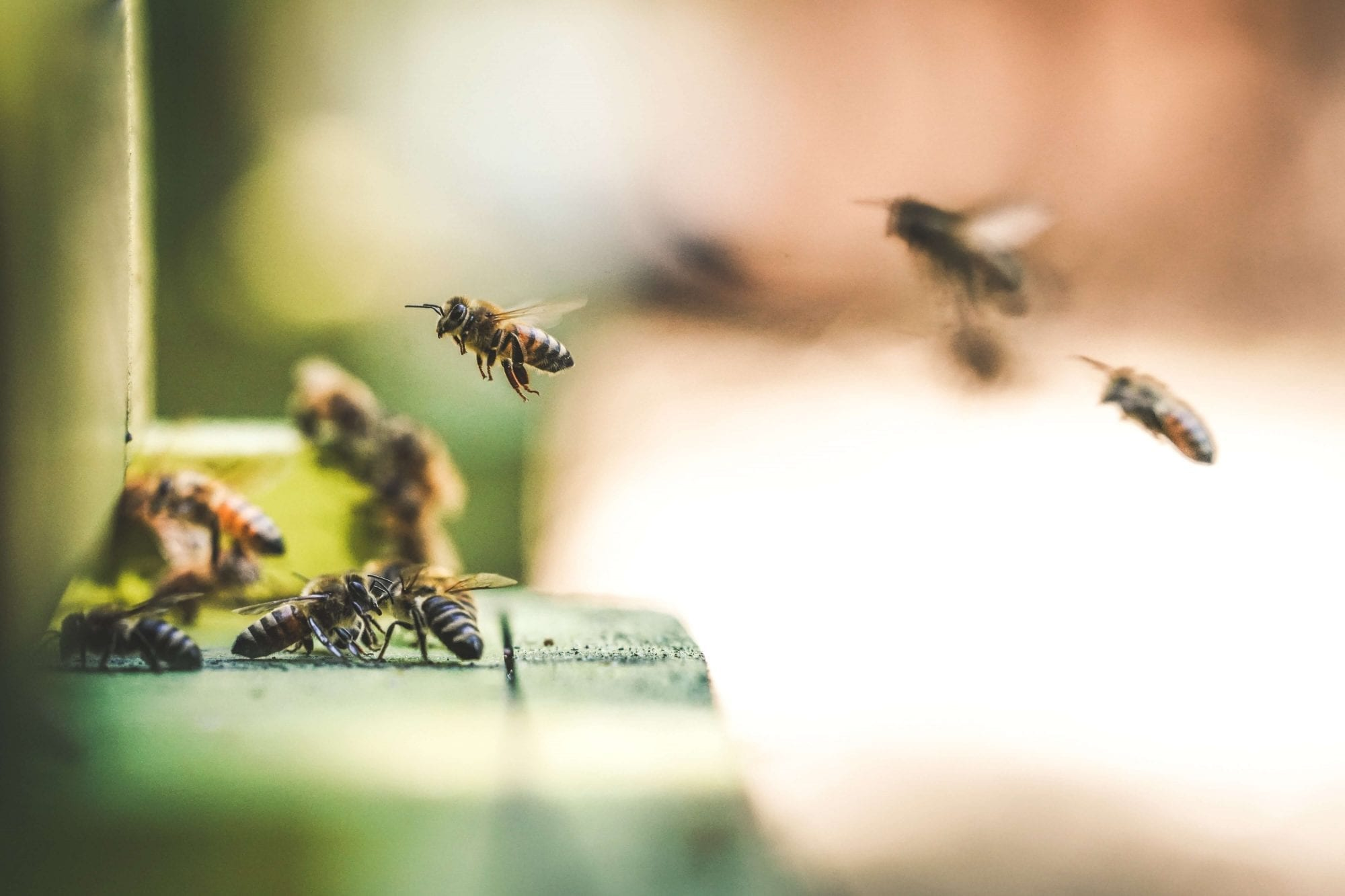 How to Prevent a Wasp or Bee Infestation