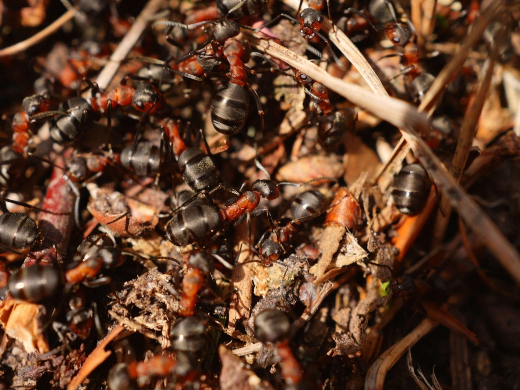 Signs of an Ant Infestation