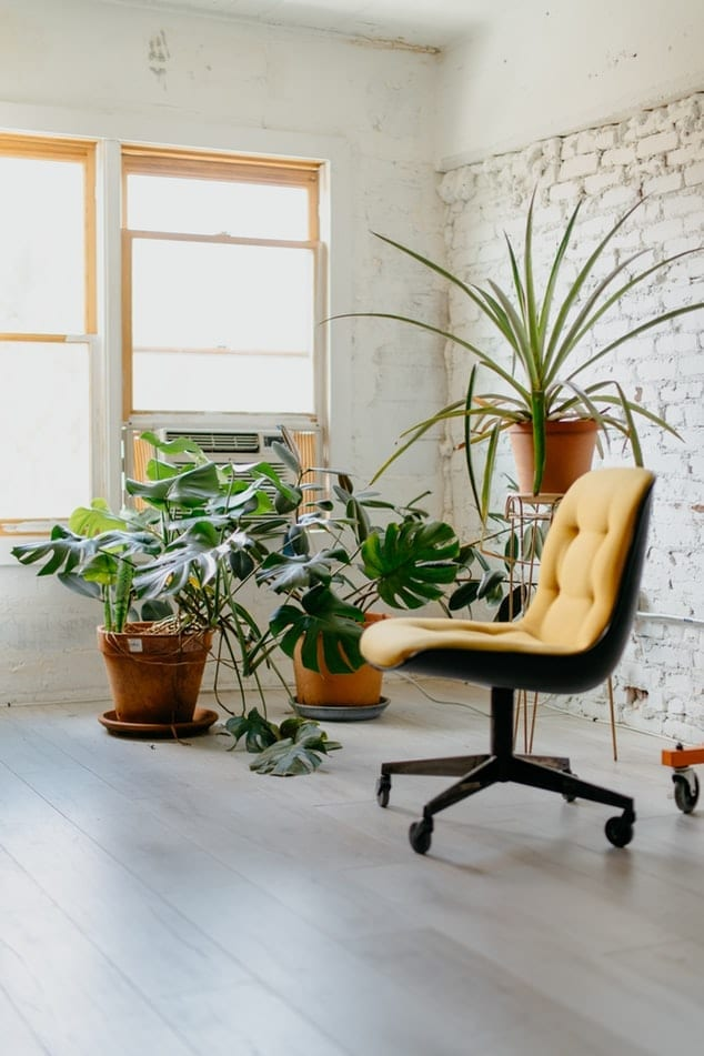 chair and pot plants