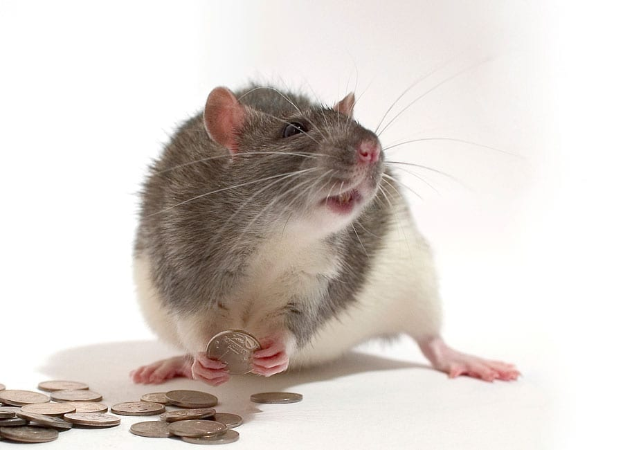 Rodent Solutions