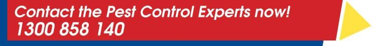 Contact the pest control sydney experts