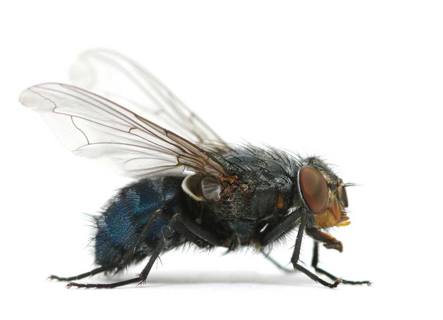 Flying Insects Solutions