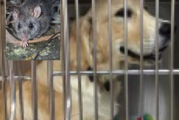 Rat Bait Toxicity in Dogs