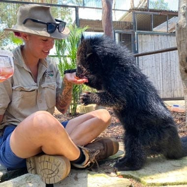 Binturong Encounter