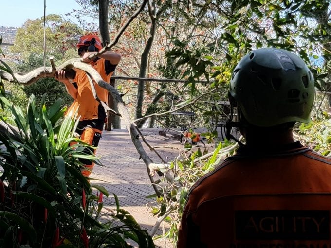 tree pruning and dead wooding newcastle