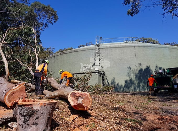 Tree and Weed Removal Newcastle