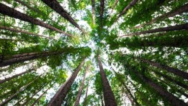 Planting Trees Program: answer our survey and help recover Australian forests