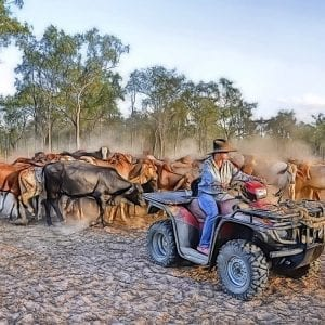 Strathaven Station Qld cattle station