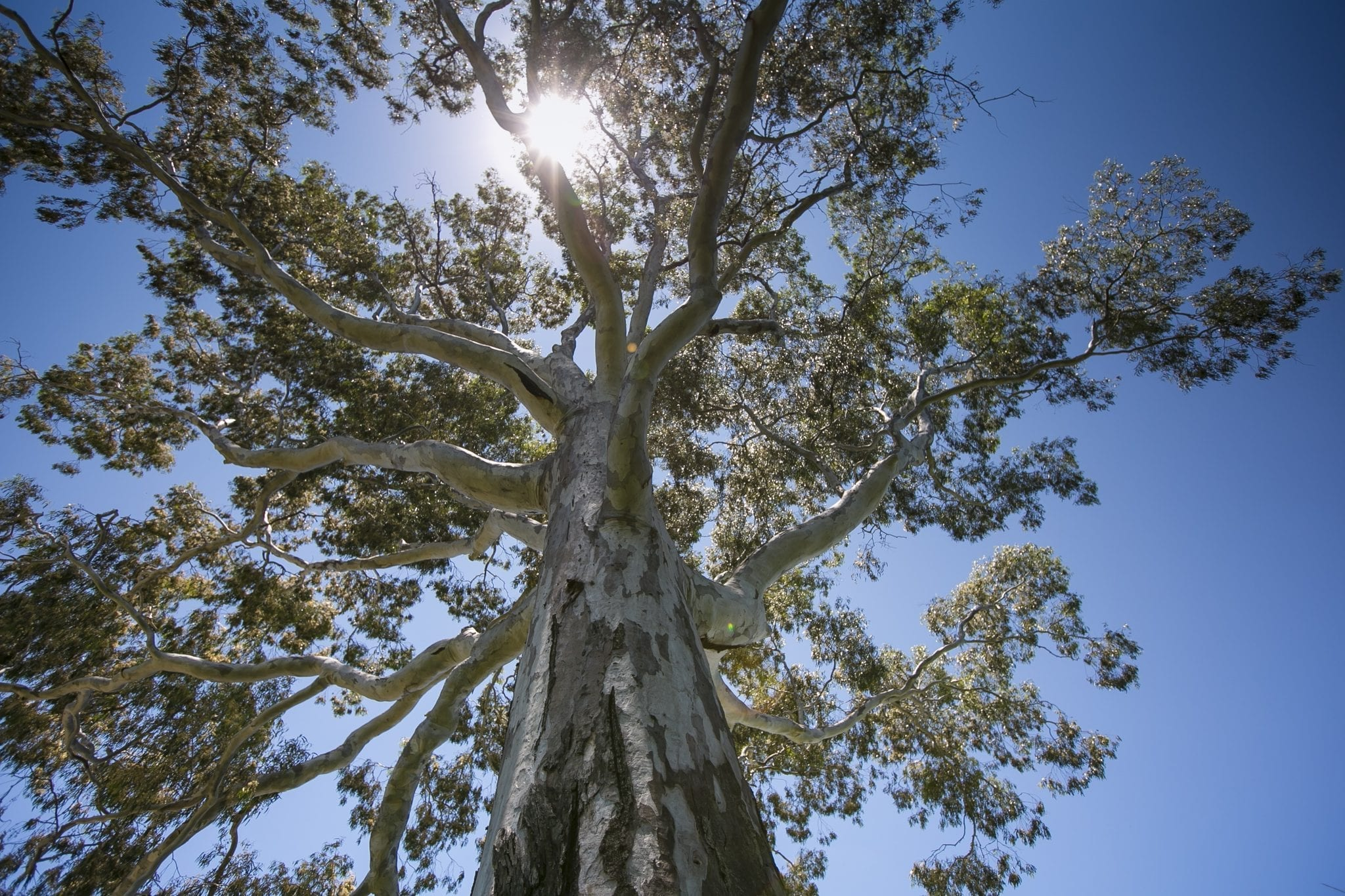 Biodiversity Conservation Reforms and Land Management – Key Information Links for Councils