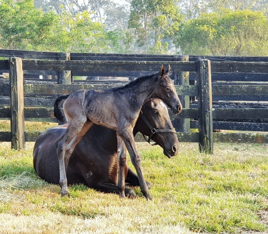 Hanging up the Foaling Alarm