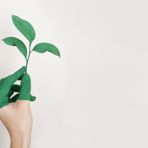 19 Ways to Promote Sustainability At Your School